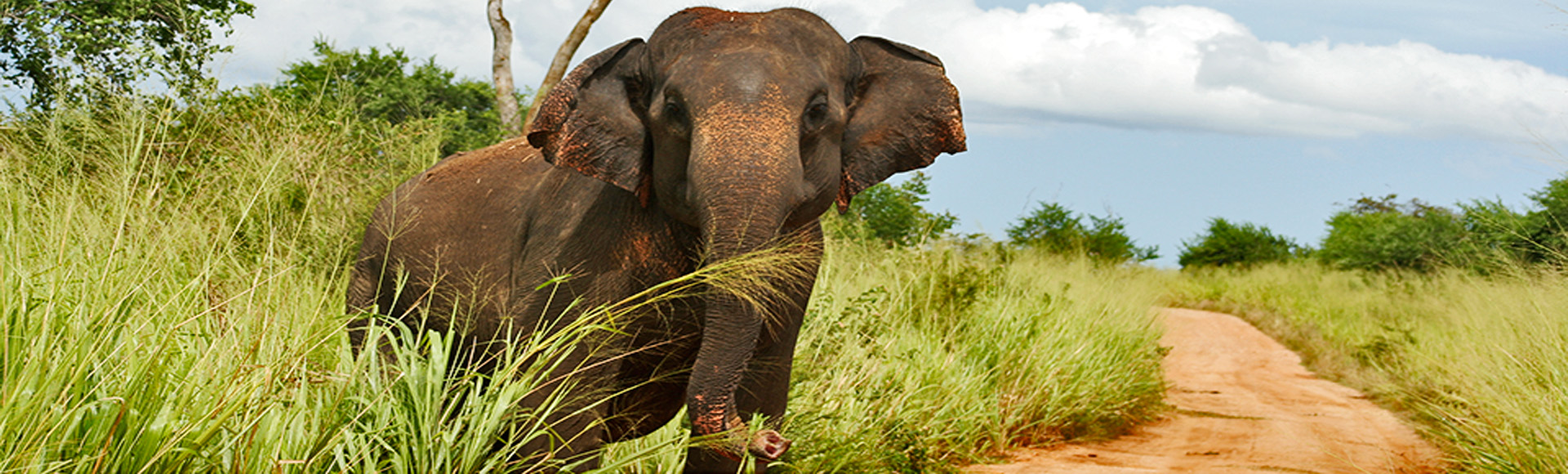Maak persoonlijk kennis met een Indische Olifant.